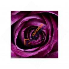 Самостійний сегмент модульної картини «Фіолетова пристрасть»