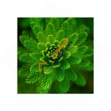 Самостійний сегмент модульної картини «Доброта природи»