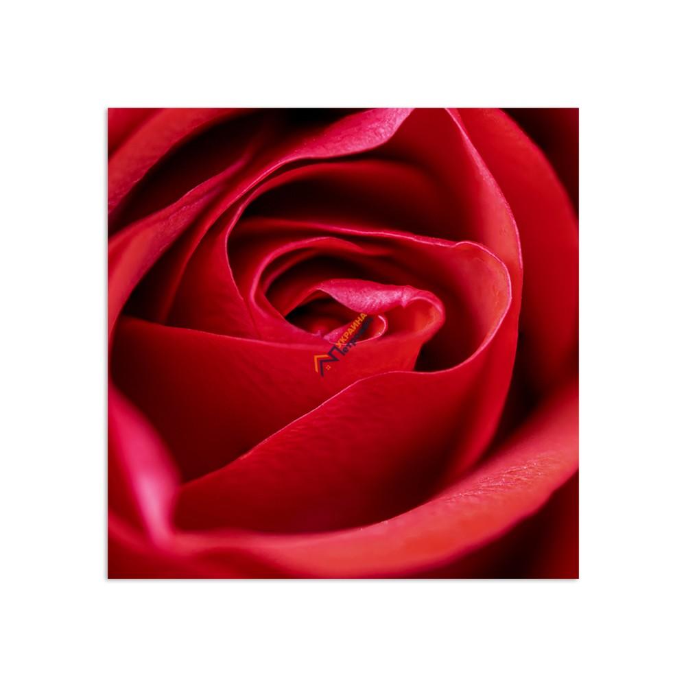 Самостоятельный сегмент модульной картины «Роза» - цена, отзывы, характеристики на стройбазе в Киеве и Харькове