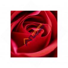 Самостоятельный сегмент модульной картины «Роза»